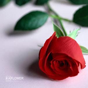 Số lượng bông hồng khi tặng hoa có ý nghĩa gì ?