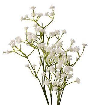 Tặng hoa baby trắng có ý nghĩa gì