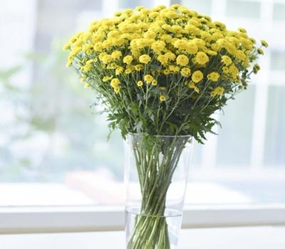 bó hoa cúc Calimero đẹp