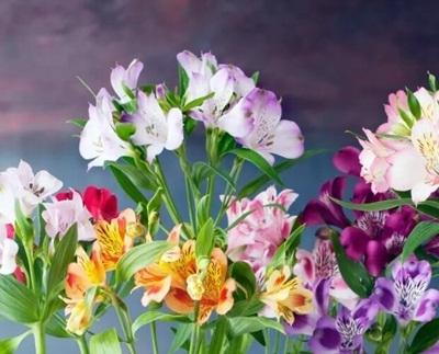 Cách tặng hoa sinh nhật cho sếp