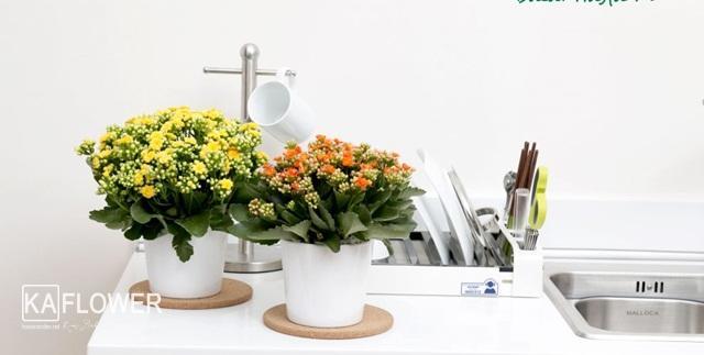 Hoa tươi tạo lên vẻ đẹp tinh tế nhiều màu sắc trong cuộc sống