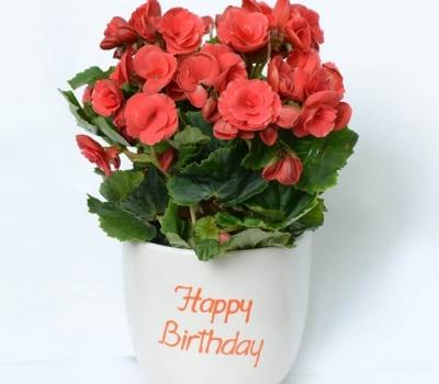 Gợi ý những mẫu hoa sinh nhật sang trọng tặng sếp