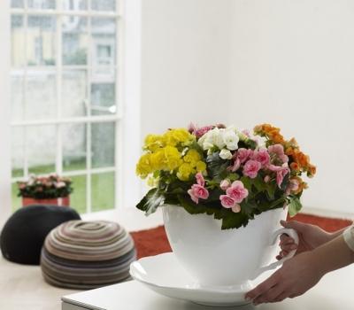 tặng hoa thu hải đường
