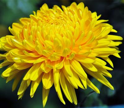 Tác dụng chữa bệnh của hoa tươi