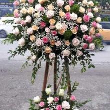 hoa ngày 20 11