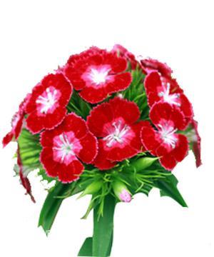 Tặng hoa păng-xê có ý nghĩa gì ?