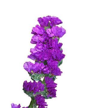 Tặng hoa salem có ý nghĩa gì