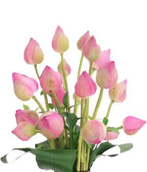 Tặng hoa sen có ý nghĩa gì