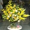 hoa tang 20 10