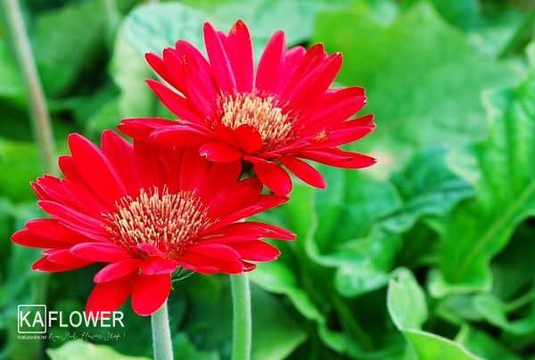 Hoa tuoi nguyen tat thanh