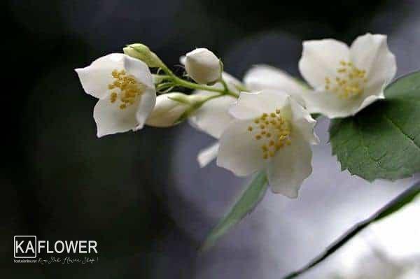 Shop hoa tuoi huyen Hoa Vang